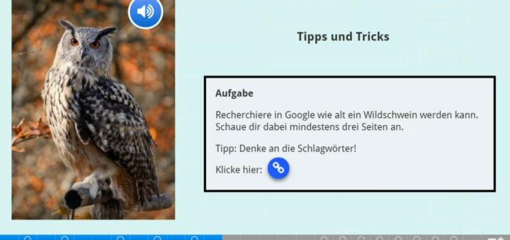 Ein Screenshot einer Eule mit einem Textkasten daneben, in dem eine Rechercheaufgabe steht.